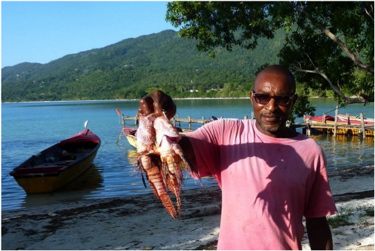 Jamaica Tackles its Lionfish Problem