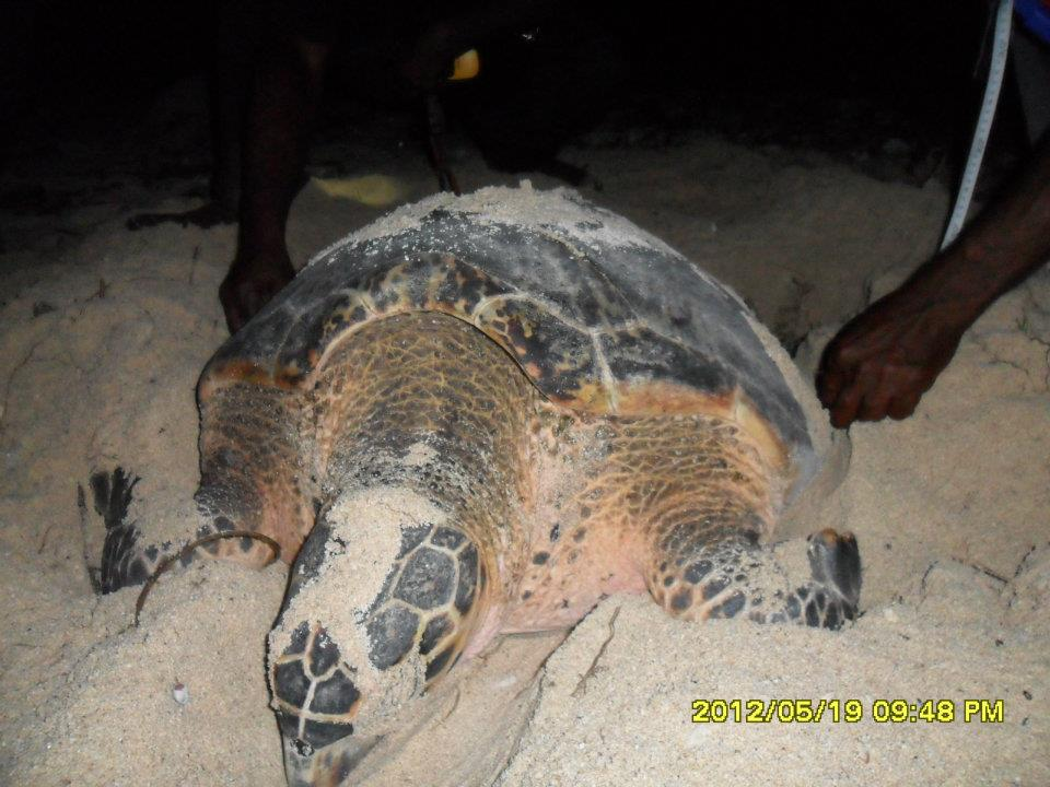Sea Turtle Protection Program